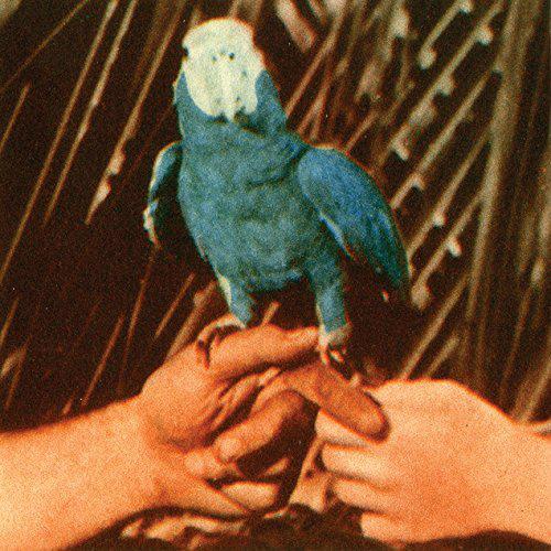 ANDREW BIRD ARE YOU